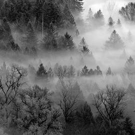 Wes and Dotty Weber - Forest Mist W8333