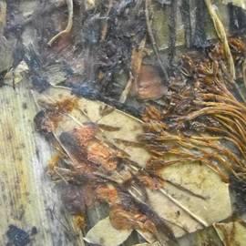 Basant Soni - Kiln effect in Forest