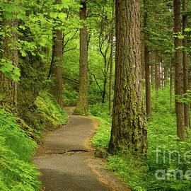 Idaho Scenic Images Linda Lantzy - Forest Trail