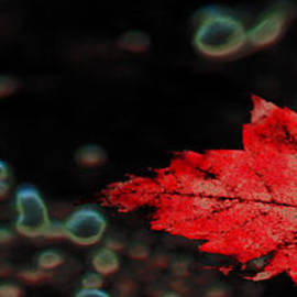 Optical Playground By MP Ray - Frozen red leaf