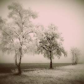 Prashant Ambastha - Frozen Trees