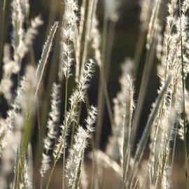 James Granberry - Fuzzy Grass