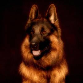 Sandy Keeton - German Shepherd Portrait