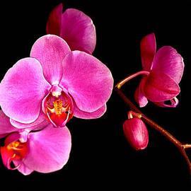 Jean Noren - Get well orchids