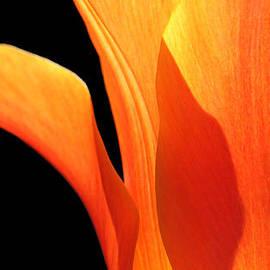 Jennie Marie Schell - Glowing Orange Tulip Abstract Flower