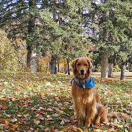Kara Kincade - Golden Boy in the Golden Leaves