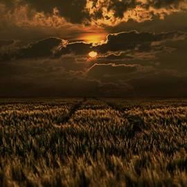 Joachim G Pinkawa - Golden Hour