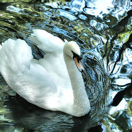 Debra     Vatalaro - Grace Of The Swan