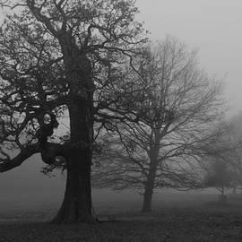 Maj Seda - Gradual Trees
