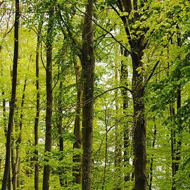 Bianca Baker - Grunewald Forest