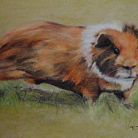 Tanya Patey - Guinea Pig