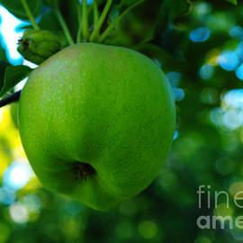 Jeff  Swan - Hanging Apple