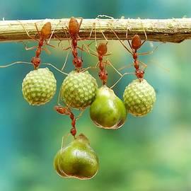 Eko Adiyanto - Hanging