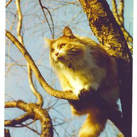 Barbara McGeachen - Hanserelli in Tree