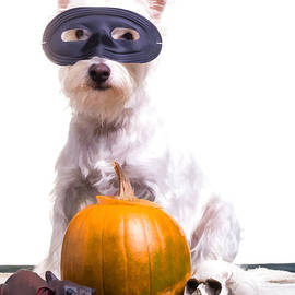 Edward Fielding - Happy Halloween Dog