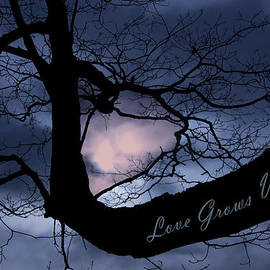 Robin Lewis - Heart in Tree Love Grows Within