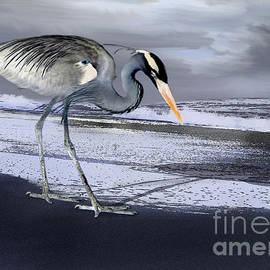 Danuta Bennett - Heron taking his afternoon Beach walk
