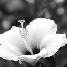 Kerri Ligatich - Hibiscus Black and White
