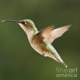 Lori Whalen - Hummingbird 1