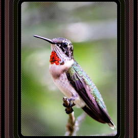 Travis Truelove - Hummingbird Card