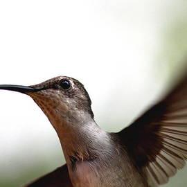 Travis Truelove - Hummingbird - Closeup