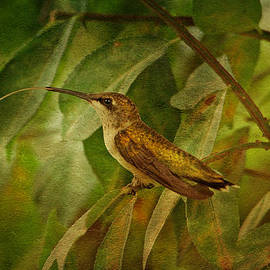 Sandy Keeton - Hummingbird on Branch