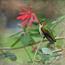 Debbie Portwood - Hummingbird on Honeysuckle