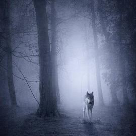Svetlana Sewell - Hunting Wolf