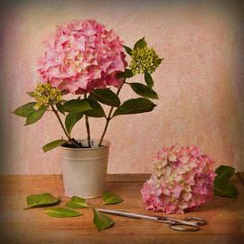 Ian Barber - Hydrangea Pink Flower