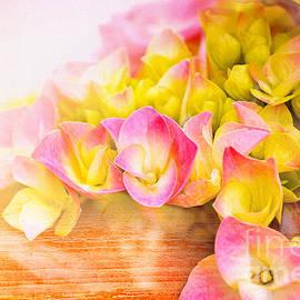 Elaine Manley - Hydrangeas in Bloom