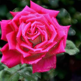 Sherri  Of Palm Springs - I Am A Beautiful Rose  I Am Who I Am