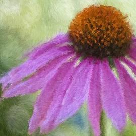 Heidi Smith - Impressionist Coneflower