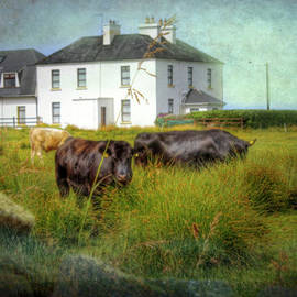 Mark Richards - In the Meadow Southern Ireland