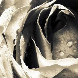 Jayne Logan Intveld - Intimate Grey