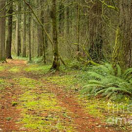 Idaho Scenic Images Linda Lantzy - Into the Forest