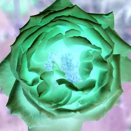 James Granberry - Inverted Rose I