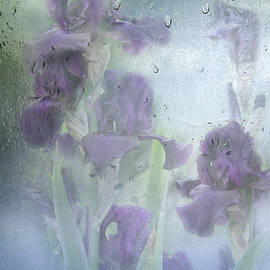 Diane Schuster - Iris In The Spring Rain
