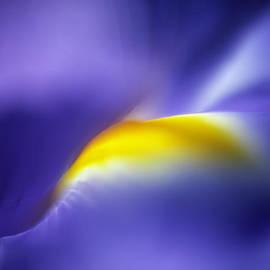 Zeb Andrews - Iris