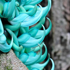 Kelly Headrick - Jade Vine close up