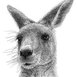 Scott Woyak - Kangaroo