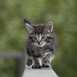 Katarina Risell - Kitten run