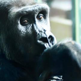 Bill Cannon - Kivu the Gorilla