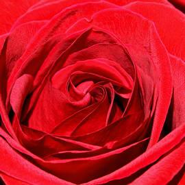 Karon Melillo DeVega - L Amore Rosa