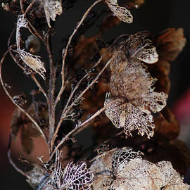 DiDi Higginbotham - Lace Leaves