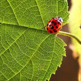 Donna Swiecichowski - Lady Bug