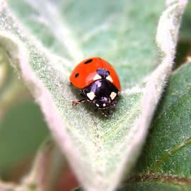 Ester  Rogers - Ladybug