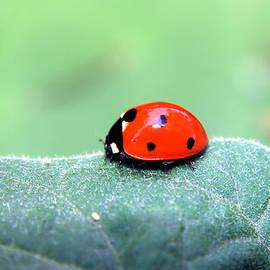 Ester  Rogers - Ladybug II
