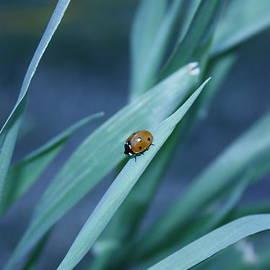 Amy Marinelli - Ladybug Travels