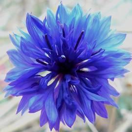 Barbara St Jean - Lapis Lazuli