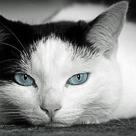 Claudia Moeckel - Lazy Cat